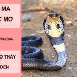 Giải mã nằm mơ thấy rắn đen là điềm báo gì? đánh số mấy