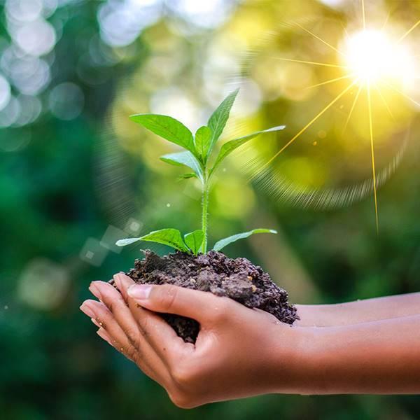 Giải mã ý nghĩa khi nằm mơ thấy trồng cây là điềm báo gì