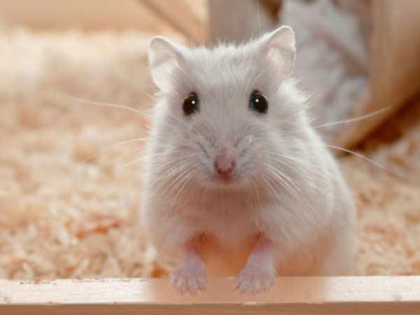 Nằm mơ thấy chuột con đánh con gì ? là điềm hên hay xui ?