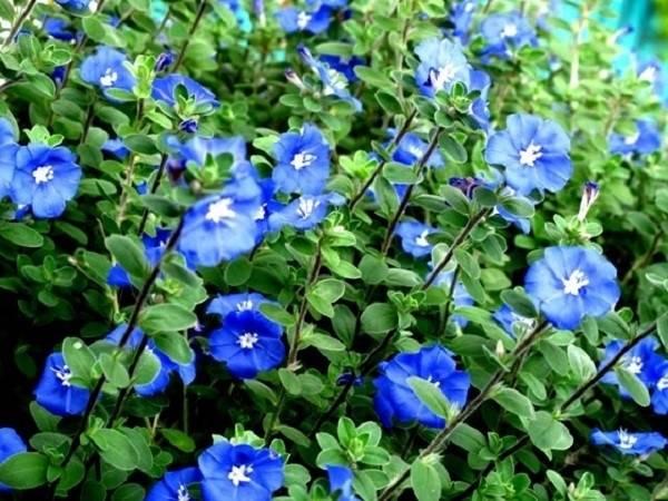 Nằm mơ thấy hoa nở có những ý nghĩa gì đặc biệt